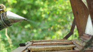hun trùng sản phẩm gỗ