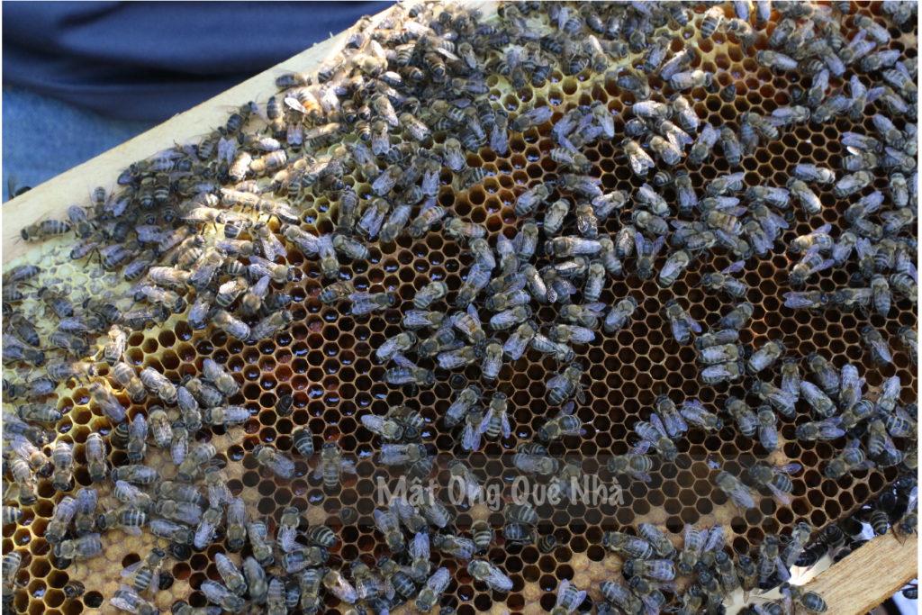 Nơi bán mật ong uy tín tại Sài Gòn