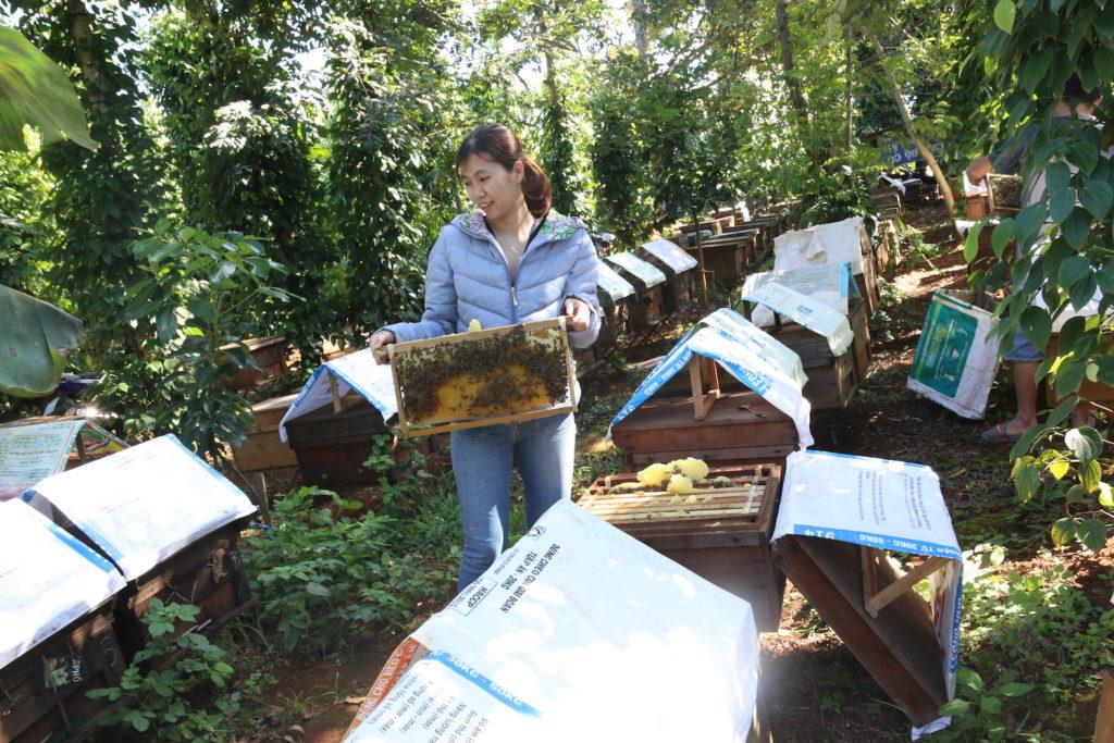 Trang trại mật ong ở Đăk Lăk - Mật ong quê nhà