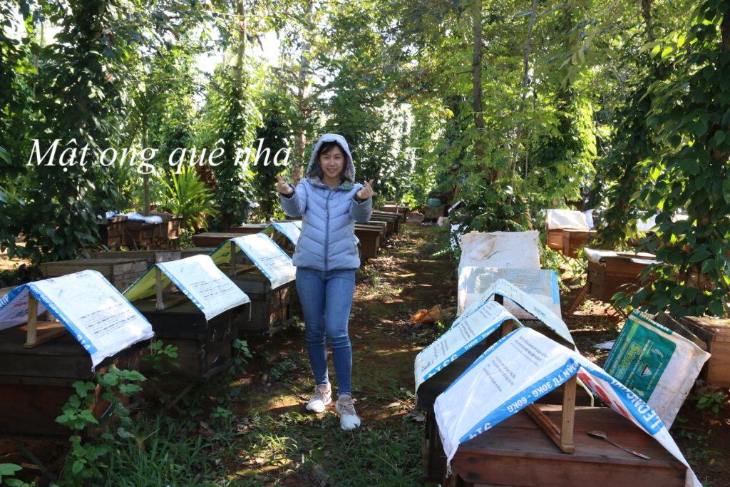 Mật ong nuôi chất lượng không khác mật ong rừng