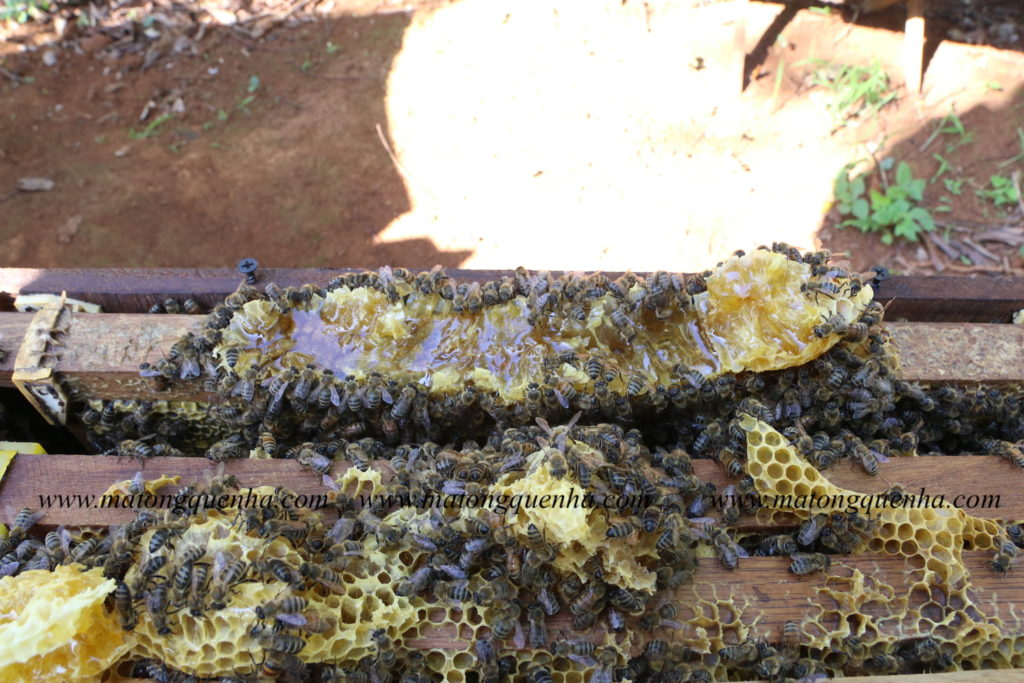 Nơi bán mật ong uy tín tại Sài Gòn - giá 200k